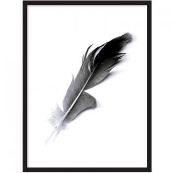 Fjäder Poster