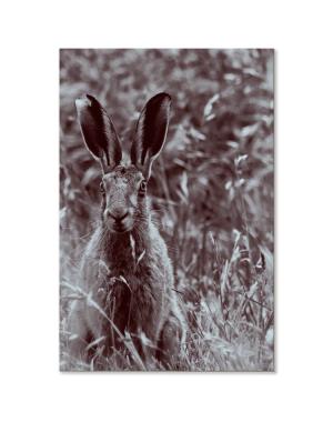 "Canvastavla ""Hare"""