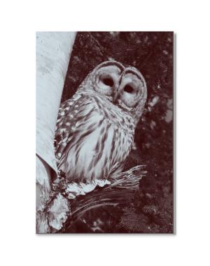 "Canvastavla ""Owl"""